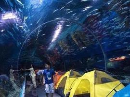 夜宿海洋馆奇妙夜!你会看见什么?
